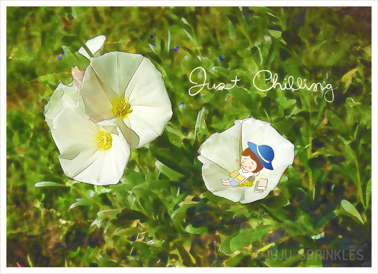 3 White Flamenco Bindweed Photo