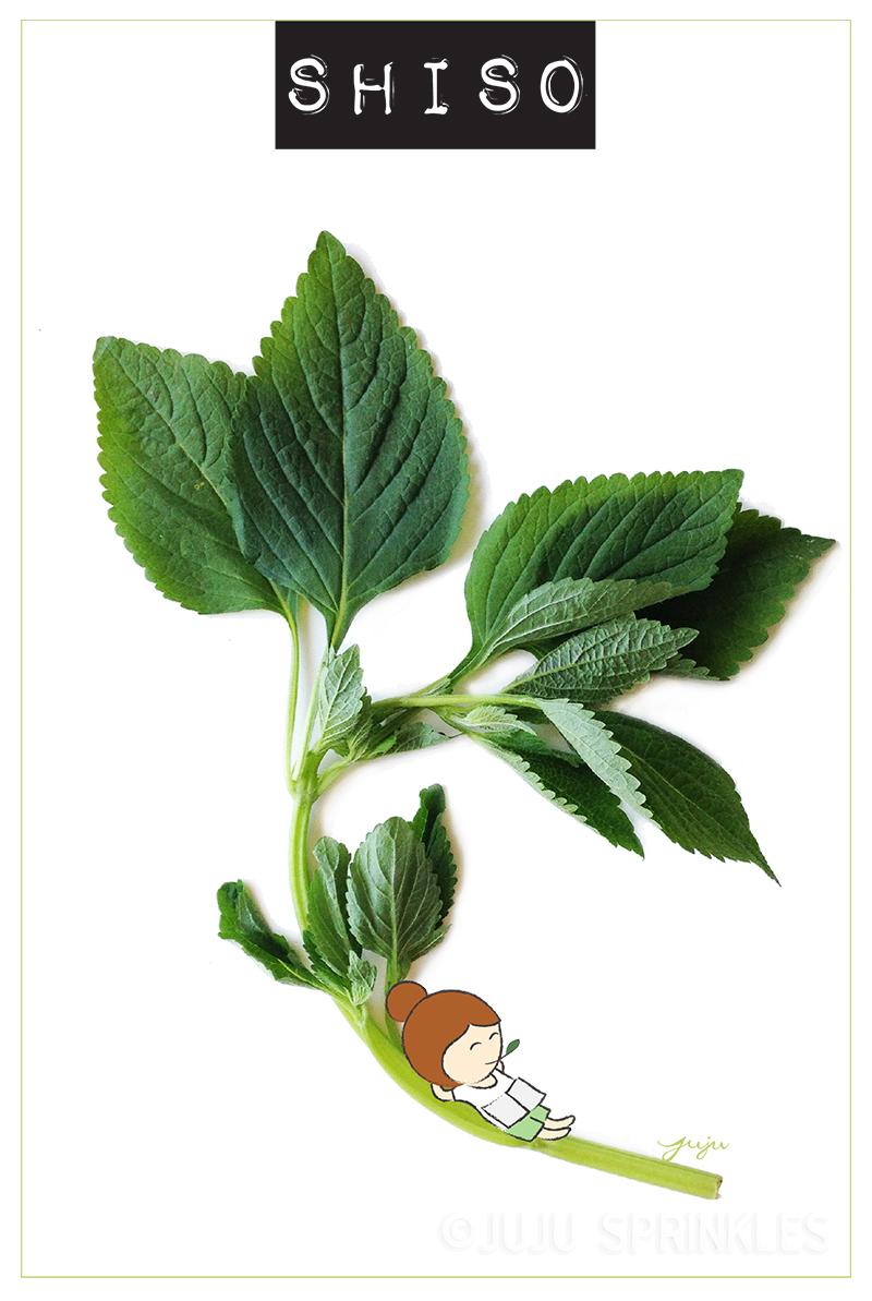 Shiso Leaf Juju